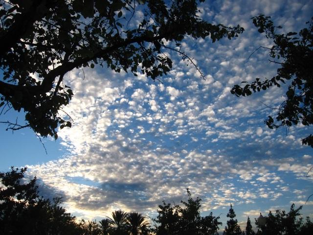 Wolken Conny 1
